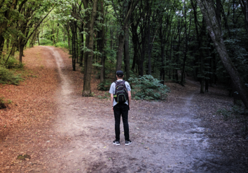 forest-bathing-crossroads