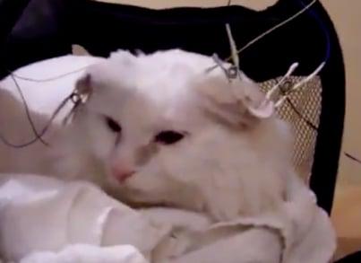 Neurofeedback cat