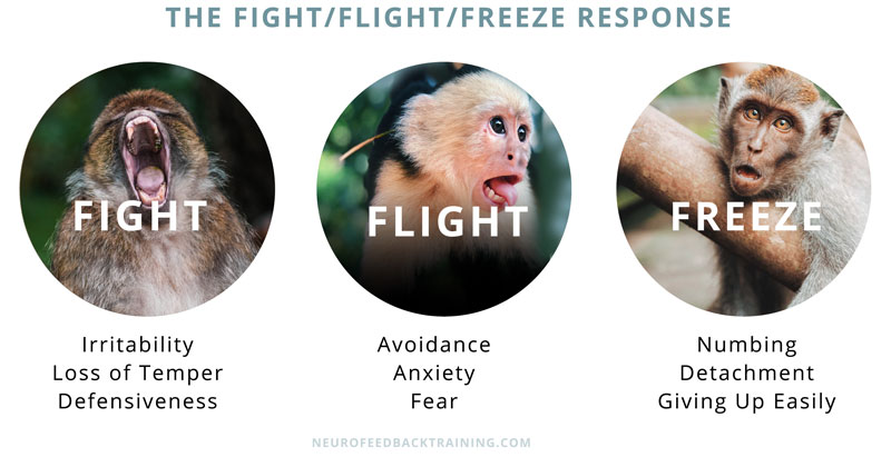 Fight-Flight-Freeze-neurofeedbacktraining_02